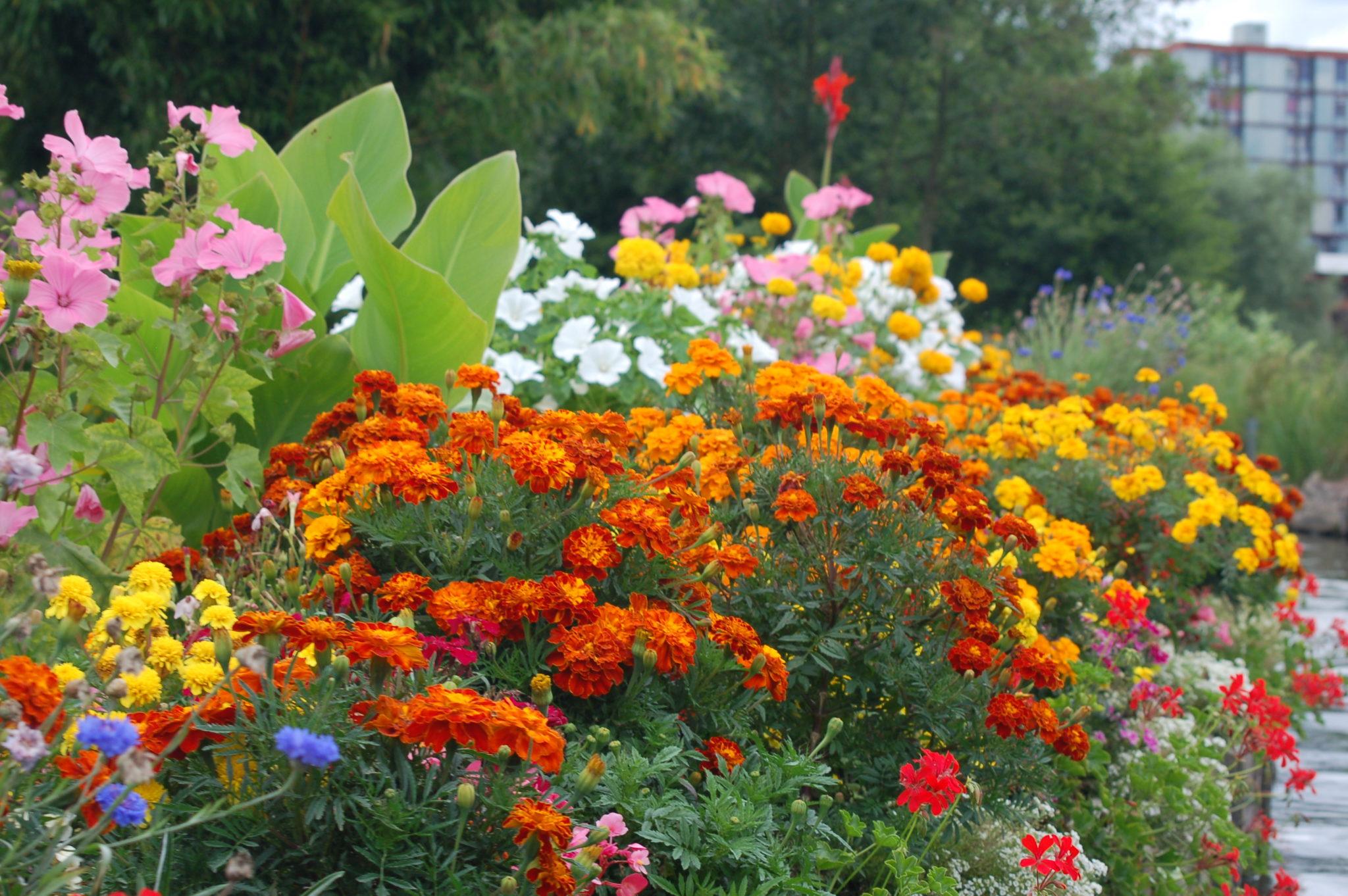 Jardiniers du paradis «rêves de jardin»