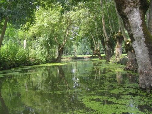 L'eau dans le marais poitevin