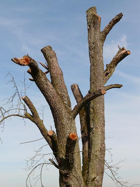 Dois-je tailler mon arbre ?
