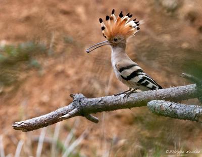 À l'affût des oiseaux, photographies de Philippe Nominé