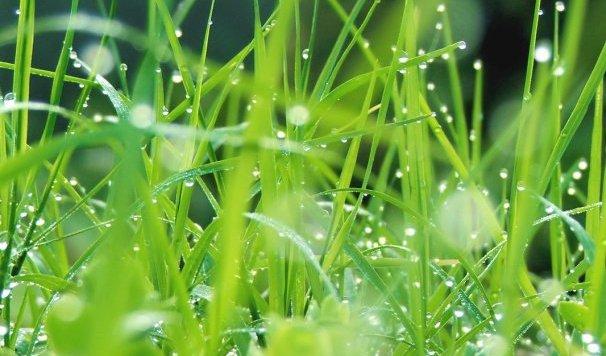 Chimie durable et croissance verte