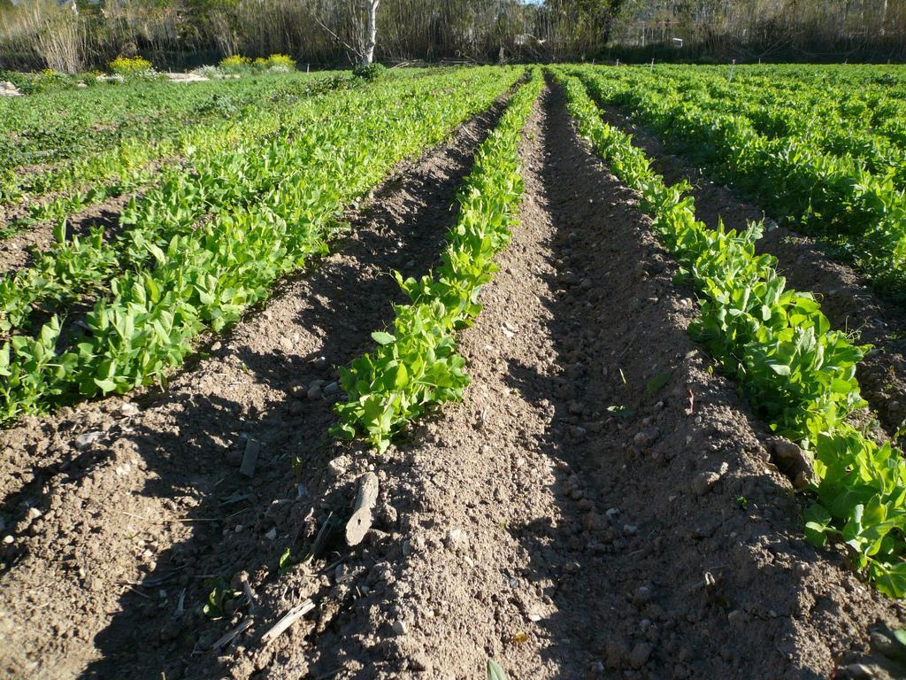 Quelle agriculture maraîchère pour demain ?