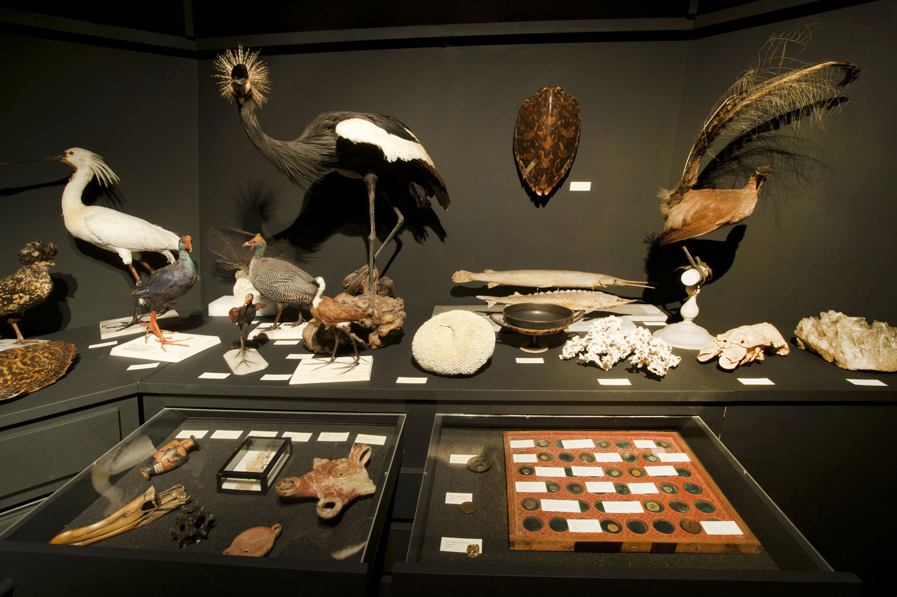 Art contemporain et cabinets de curiosit s espace mend s france culture m diation - Cabinet de curiosite contemporain ...