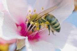Mini cerveau et mega performances : comprendre la cognition à partir d'une abeille