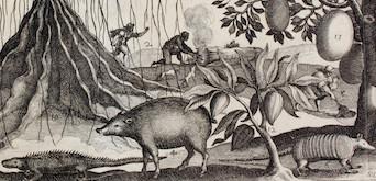 L'Heure du livre ancien : images européennes de l'Amérique (XVIe-XVIIIe siècles)