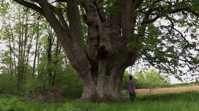 Projections de films de l'IFFCAM : «Les serviteurs du sol» et  «Et si j'étais une plante ?»