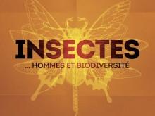 Exposition « Insectes… Hommes et biodiversité » – DERNIERS JOURS !!!!!