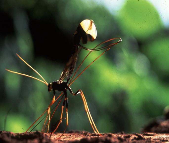Mille milliards d'insectes… et nous et nous et nous !