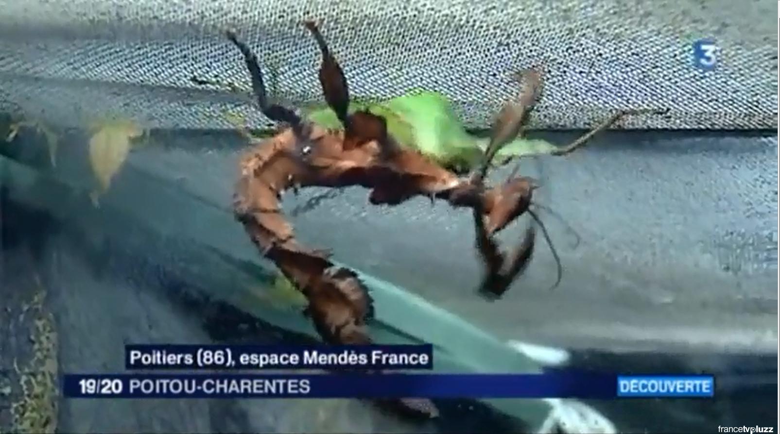 Reportage Insectes sur France 3 Poitou-Charentes