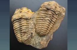 Fossiles 2016 – exposition proposée par l'amicale des paléontologues amateurs du Poitou