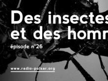 Des insectes et des hommes // Les Détectives Sauvages – Radio Pulsar