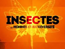 L'exposition Insectes exceptionnellement fermée