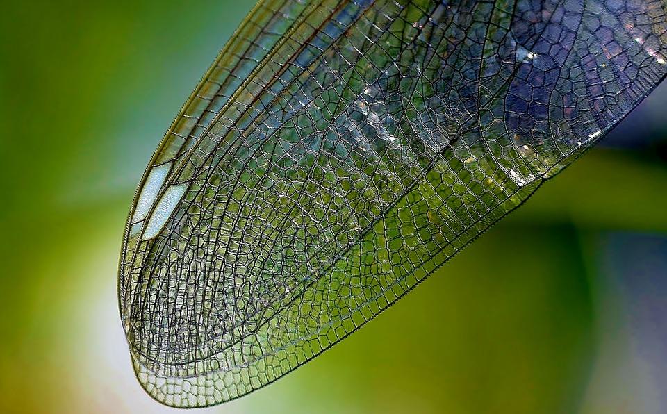 Les insectes, les araignées et nous : pourquoi sont-ils indispensables ?