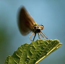 À la découverte des insectes
