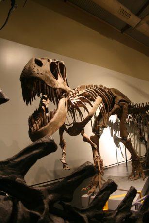 ateliers-scientifiques-secret-des-dinosaures