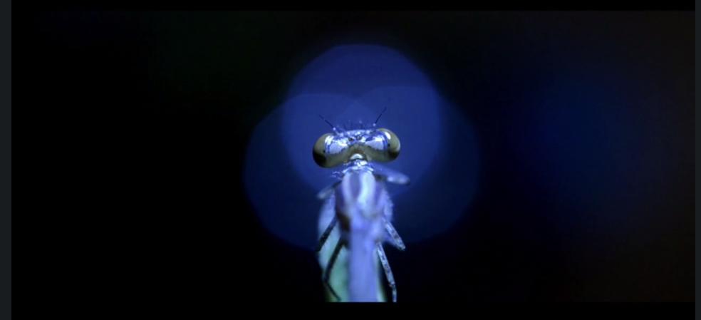 À la découverte des insectes – teaser de films IFFCAM 2016