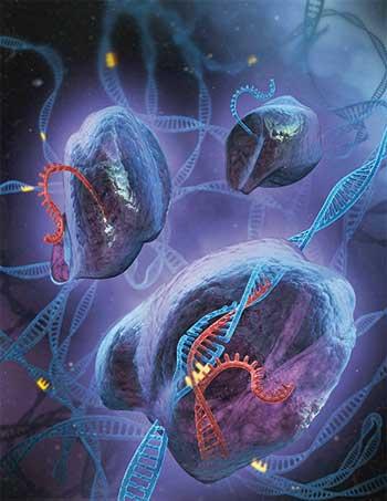 La révolution CRISPR-CAS