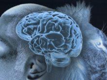 Appel à projets 2017 : Cerveau hommes, animaux et neurosciences