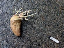 Grosse patate – Cheval Scintillantes & Hélène La Hyène